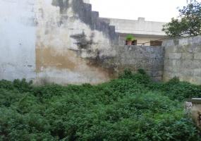 nella foto vediamo un giardino nel centro di morciano di leuca in una casa antica
